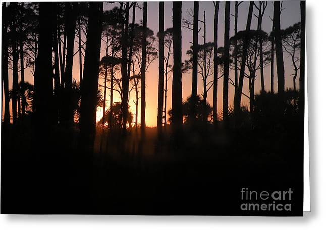 Port St Joseph Greeting Cards - Sunset Thru the Pines III Port St Joseph Peninsula Greeting Card by Lora Duguay