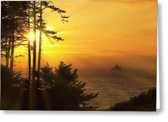 Finr Art Greeting Cards - Sunset thru the Trees Greeting Card by Andrew Soundarajan