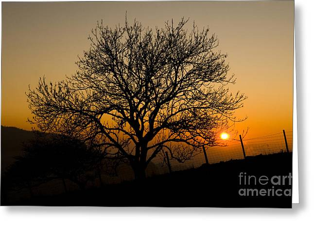 Haze Greeting Cards - Sunset Tree Greeting Card by Anne Gilbert