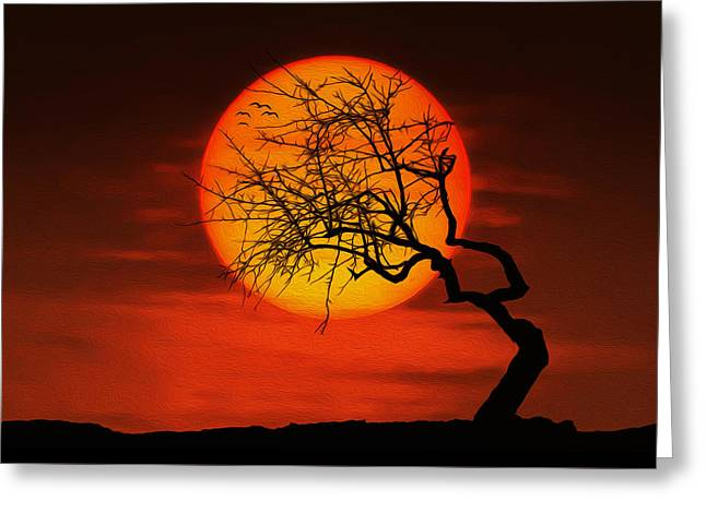 Peaceful Scenery Greeting Cards - Sunset tree Greeting Card by Bess Hamiti