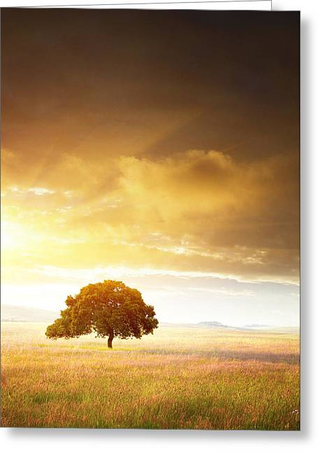 Flowery Greeting Cards - Sunset Tree Greeting Card by Carlos Caetano