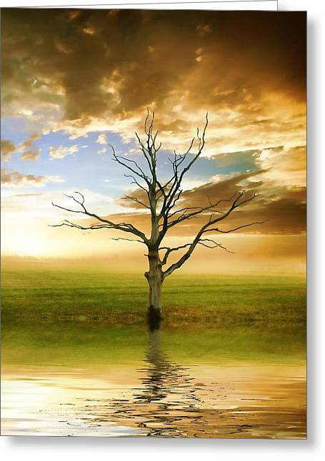 Reflecting Water Mixed Media Greeting Cards - Sunset Tree Greeting Card by Sharon Lisa Clarke