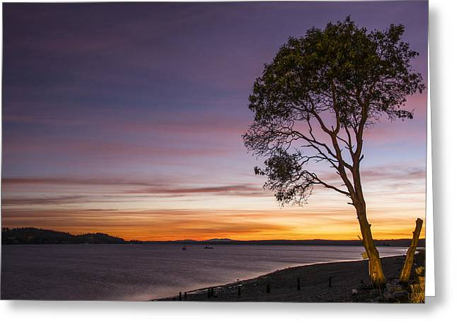 Ocean Art Photography Greeting Cards - Sunset Tree Silhouette Greeting Card by Rachel Cash