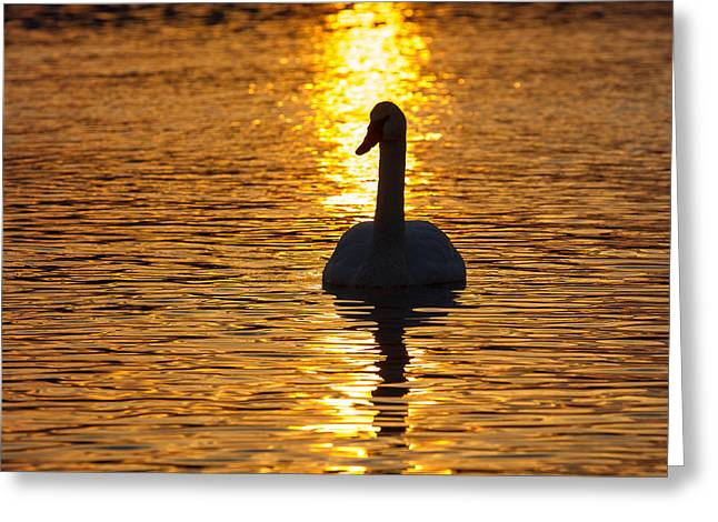 Trumpeter Silhouette Greeting Cards - Sunset Trumpeter Greeting Card by Keith R Crowley