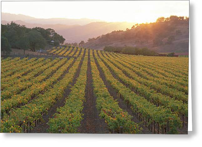 Vineyard Landscape Greeting Cards - Sunset, Vineyard, Napa Valley Greeting Card by Panoramic Images