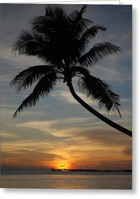 Wakatobi Greeting Cards - Sunset with tropical palm tree at Wakatobi Indonesia Greeting Card by Dray Van Beeck
