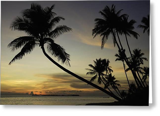 Wakatobi Greeting Cards - Sunset with tropical palm trees at Wakatobi Indonesia Greeting Card by Dray Van Beeck