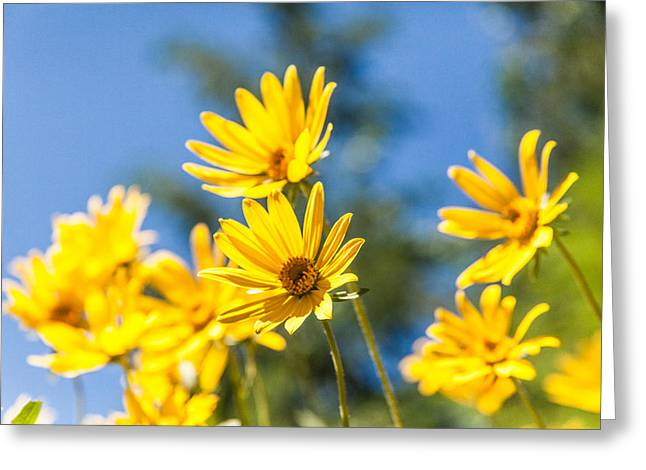 Idaho Photographs Greeting Cards - Sunshine Greeting Card by Chad Dutson