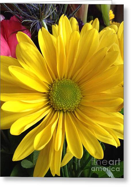 Flowers With Back Ground Greeting Cards - Sunshine Flower Greeting Card by Susan Townsend