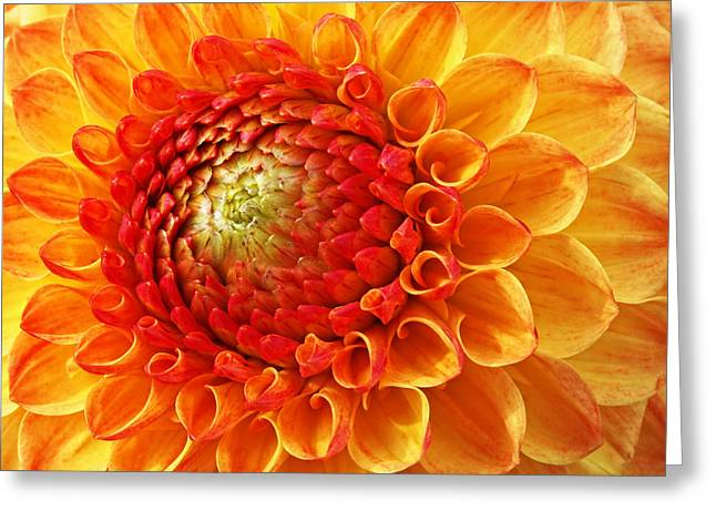 Garden Petal Image Greeting Cards - Sunshine  Greeting Card by Gill Billington