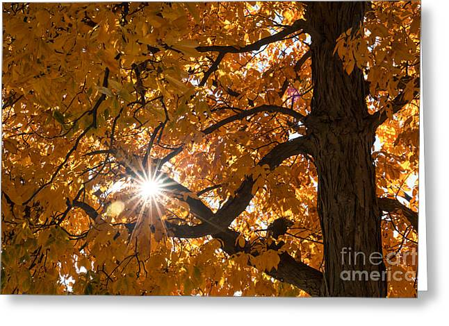 Fall Colors Greeting Cards - Sunshine Gold Greeting Card by Ana V  Ramirez