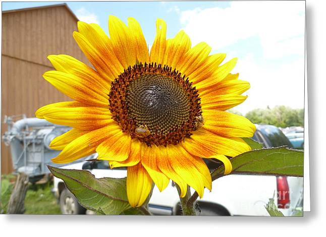 Overcast Day Greeting Cards - Sunshine In Country Farm Greeting Card by Lingfai Leung