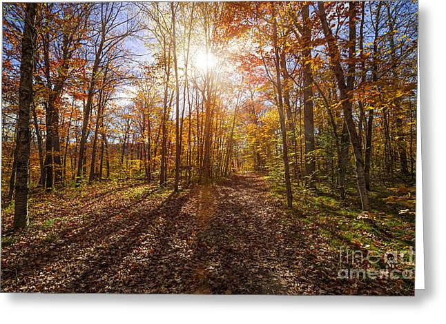 Flaring Greeting Cards - Sunshine in fall forest Greeting Card by Elena Elisseeva