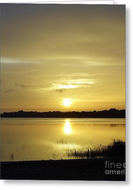 Trees Reflecting In Water Greeting Cards - Sunshine In The Morning Greeting Card by D Hackett