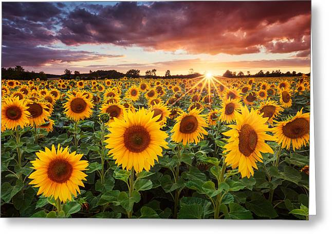Warm Summer Greeting Cards - Sunshine Greeting Card by Michael Breitung
