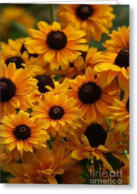 Crystal Nederman Greeting Cards - Sunshine on a Stem Greeting Card by Crystal Nederman