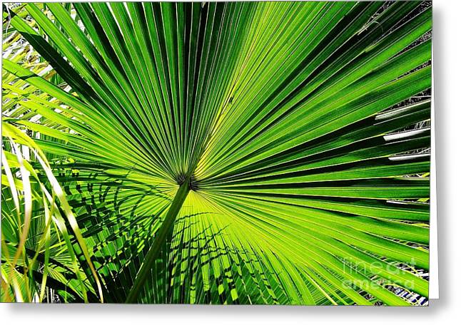 Peaceful Scenery Greeting Cards - Sunshine On The Palmetto Greeting Card by D Hackett