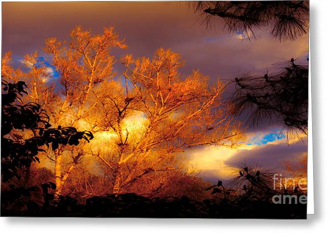 Summer Storm Greeting Cards - Sunshine On The Tree Tops After A Rain Storm  Greeting Card by Jerry Cowart