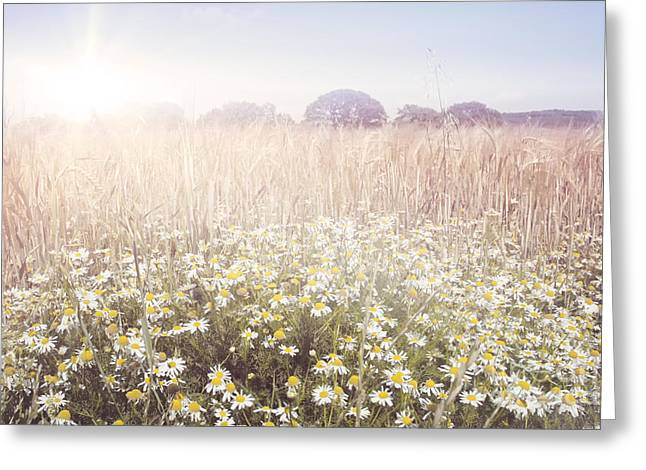 Sun Room Digital Art Greeting Cards - Sunshine over the Fields Greeting Card by Natalie Kinnear