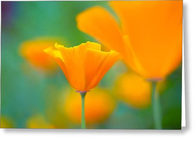 Sunshine Poppy Greeting Card by Sarah-fiona  Helme