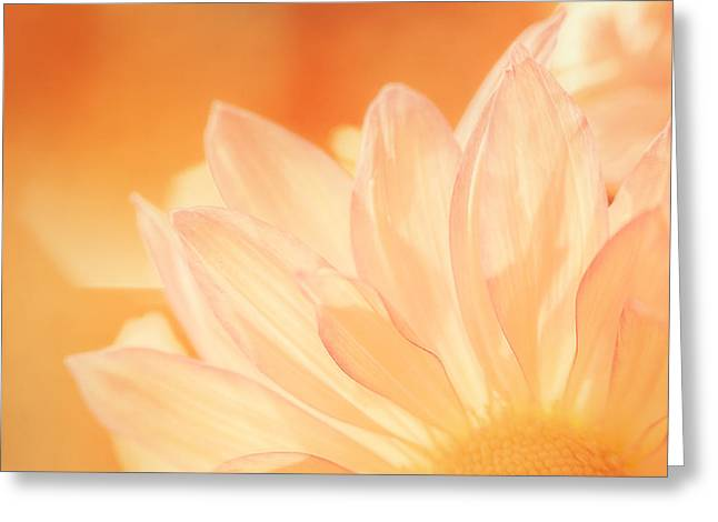 Translucent Greeting Cards - Sunshine Greeting Card by Scott Norris