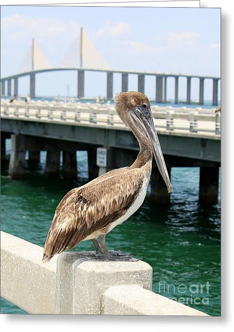 St Petersburg Florida Greeting Cards - Sunshine Skyway and Pelican Greeting Card by Carol Groenen