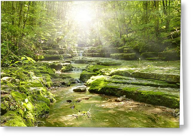 Beautiful Creek Greeting Cards - Sunshine Stream Greeting Card by Alexey Stiop