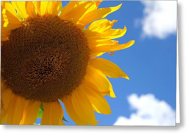 Yellow Sunflower Greeting Cards - Sunshine Sunflower Greeting Card by Fiona Kennard