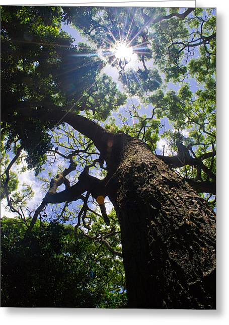 Sunshine Through The Trees Greeting Card by Matt Radcliffe