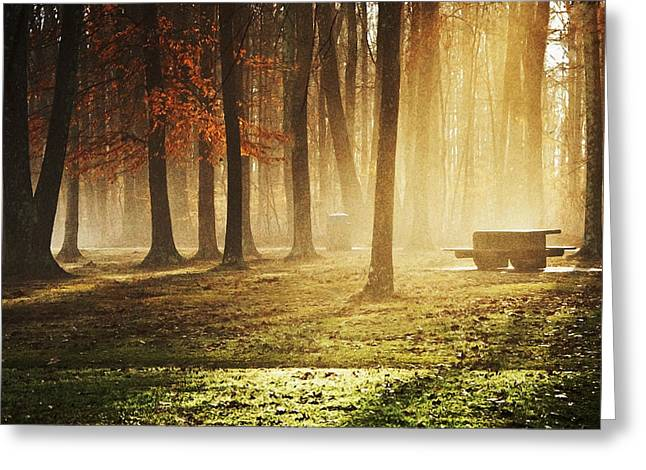 Sunshine Through The Woods Greeting Card by Diana Boyd