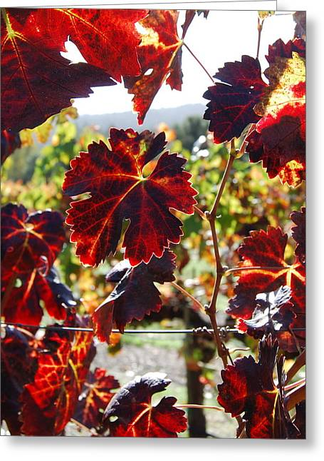 Winery Photography Greeting Cards - Sunshine Greeting Card by Wei Zhang