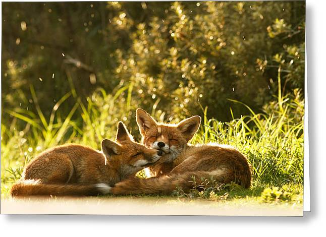 Fox Greeting Cards - Sunshower Greeting Card by Roeselien Raimond