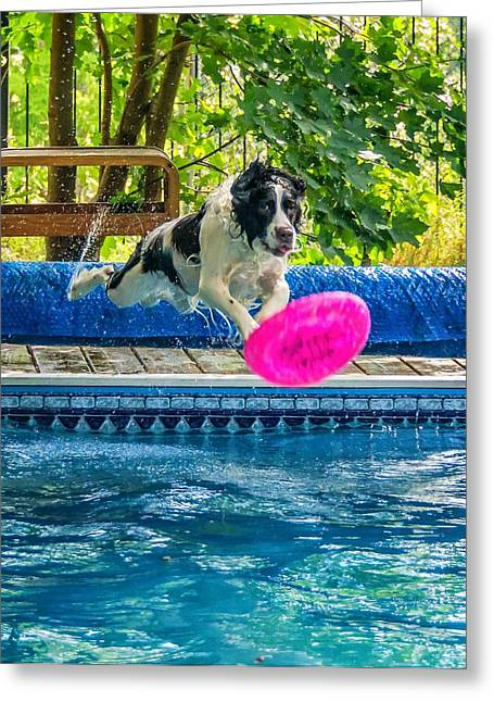 Diving Dog Greeting Cards - Super Dog 2 Greeting Card by Steve Harrington