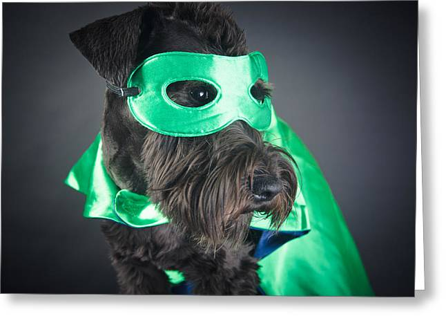 Cute Schnauzer Greeting Cards - Super dog portrait Greeting Card by Mesha Zelkovich