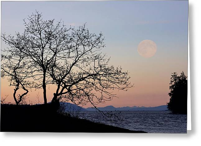 Sea Moon Full Moon Greeting Cards - Super Moonrise Greeting Card by Inge Riis McDonald