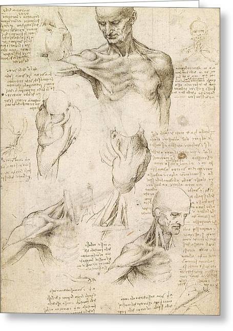 1510 Paintings Greeting Cards - Superficial anatomy of the shoulder and neck Greeting Card by Leonardo da Vinci