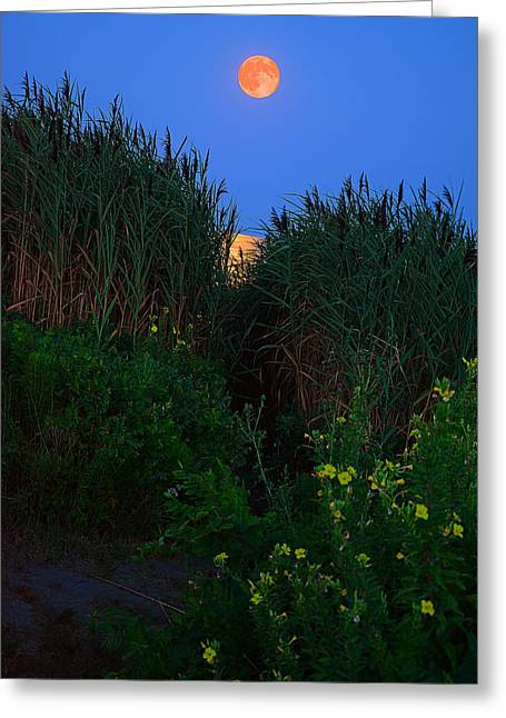 New England Ocean Greeting Cards - Supermoon 2014 -Color Greeting Card by Lourry Legarde