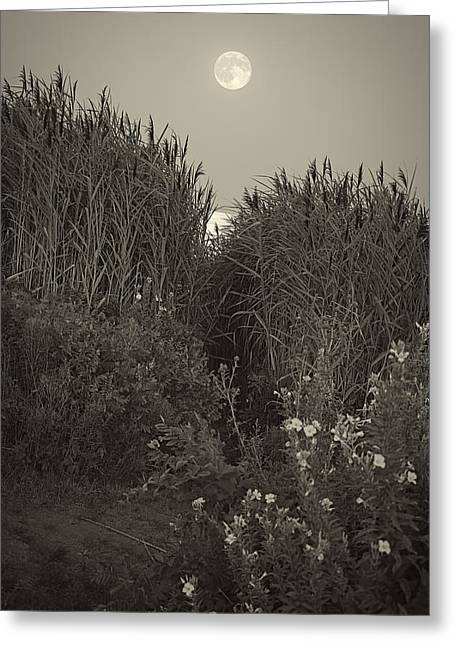 Moonrise Greeting Cards - Supermoon 2014 Monochrome Greeting Card by Lourry Legarde