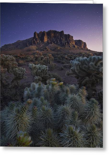 Cactus Southwest Cactus Flower Orange Wildflowers Nature Arizona Greeting Cards - Superstitious Twilight Greeting Card by Peter Coskun