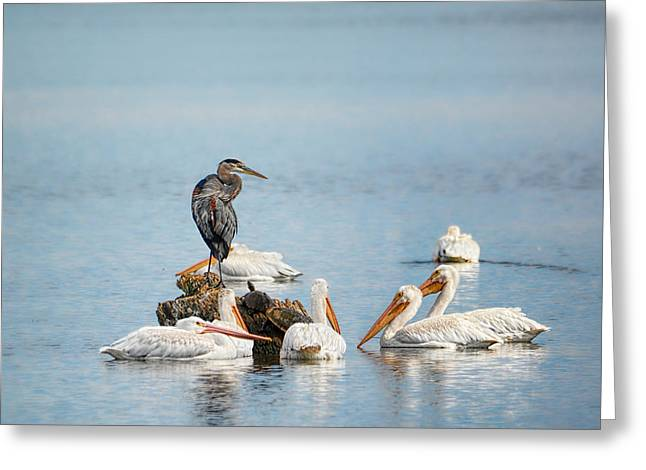 Reelfoot Lake Greeting Cards - Support Group Greeting Card by Jai Johnson