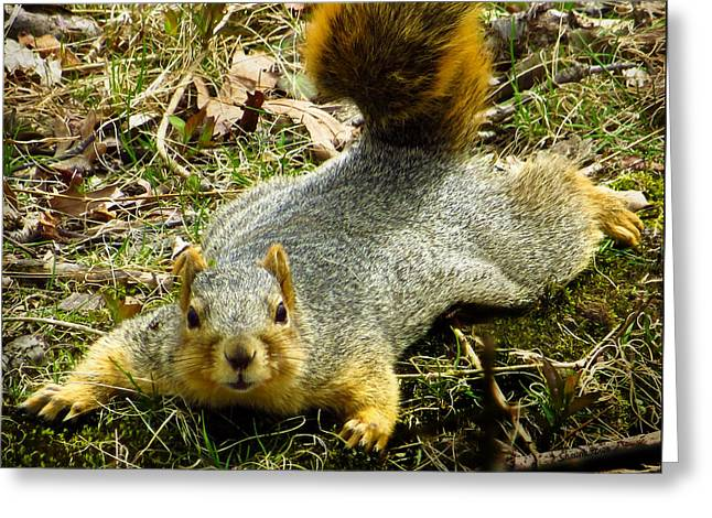 Eastern Fox Squirrel Greeting Cards - Surprise Mister Squirrel Greeting Card by Shawna  Rowe