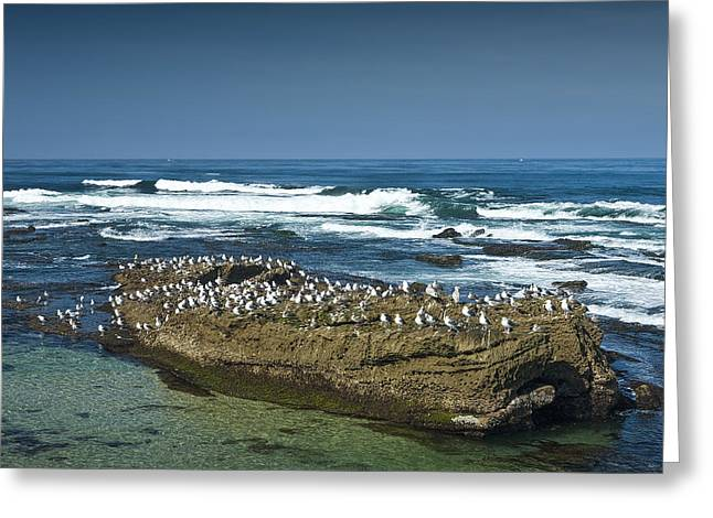 Pacific Ocean Prints Greeting Cards - Surf Waves at La Jolla California with Gulls perched on a Large Rock No. 0194 Greeting Card by Randall Nyhof