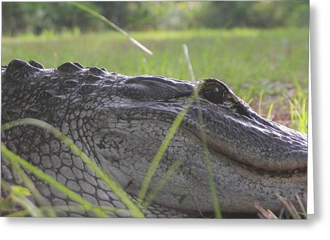 University Of Alabama Greeting Cards - Surprise Alligator House Guest  2 Greeting Card by Dodie Ulery