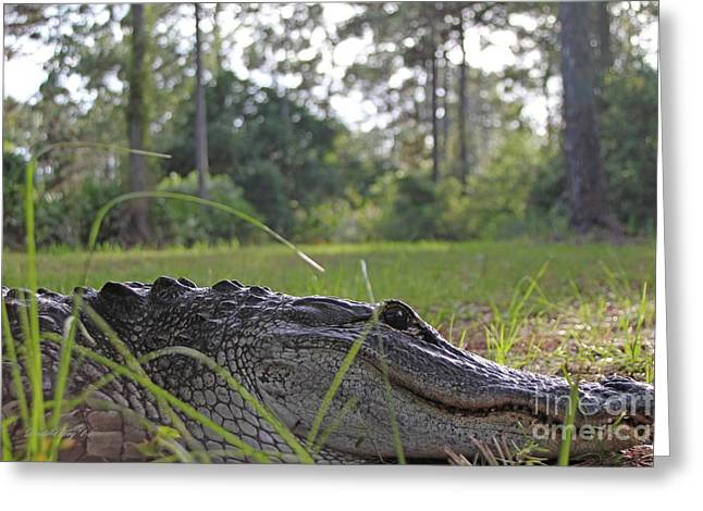 Florida Gators Greeting Cards - Surprise Alligator Houseguest Greeting Card by Dodie Ulery