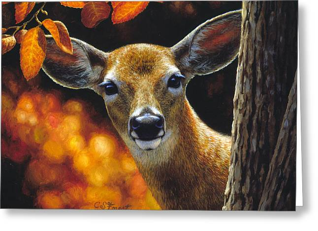 White-tail Deer Greeting Cards - Whitetail Deer - Surprise Greeting Card by Crista Forest