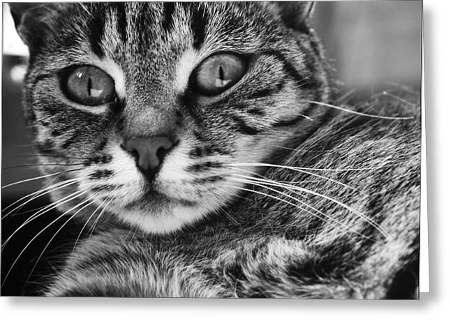 Photos Of Kittens Greeting Cards - Surprise Greeting Card by Eva Palffy