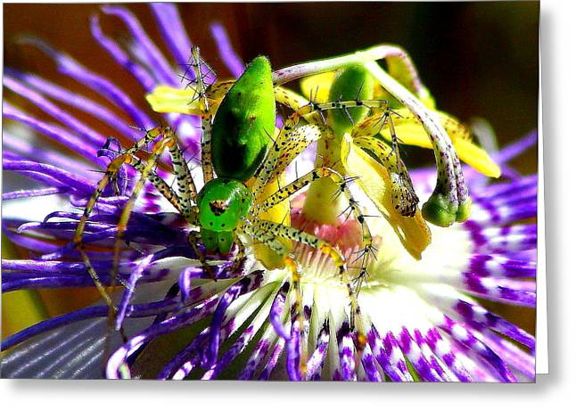 Spider Flower Greeting Cards - Surprise Greeting Card by Reid Callaway