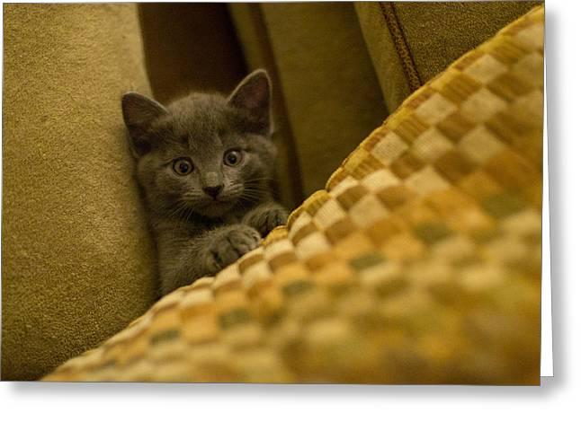 Matt Radcliffe Greeting Cards - Surprised Kitten Greeting Card by Matt Radcliffe