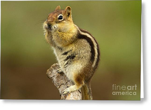 Expresion Greeting Cards - Surprised Greeting Card by Sharon Ely
