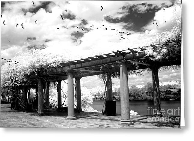 River Scenes Photographs Greeting Cards - Surreal Augusta Georgia Black and White Infrared  - Riverwalk River Front Park Garden   Greeting Card by Kathy Fornal